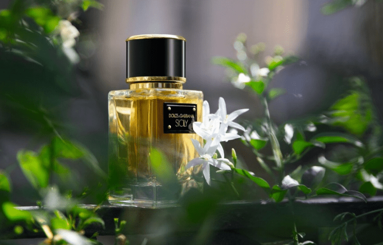 Dolce & Gabbana: perfumes that will make you fall in love 2