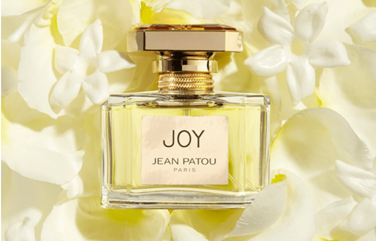 Jasmine and its delicious aroma: the favorite of perfumery 2