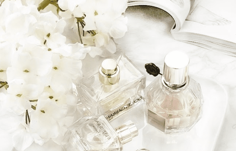 Jasmine and its delicious aroma: the favorite of perfumery 1