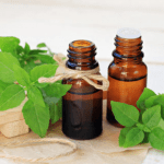 Holy Basil Essential Oil: a sacred scent with amazing uses