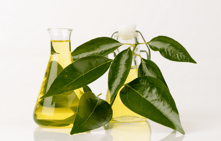 Camphor essential oil: an excellent option for your health 2